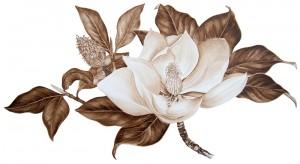 Brou de noix sur papier : Magnolia